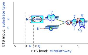 NS-pathway control